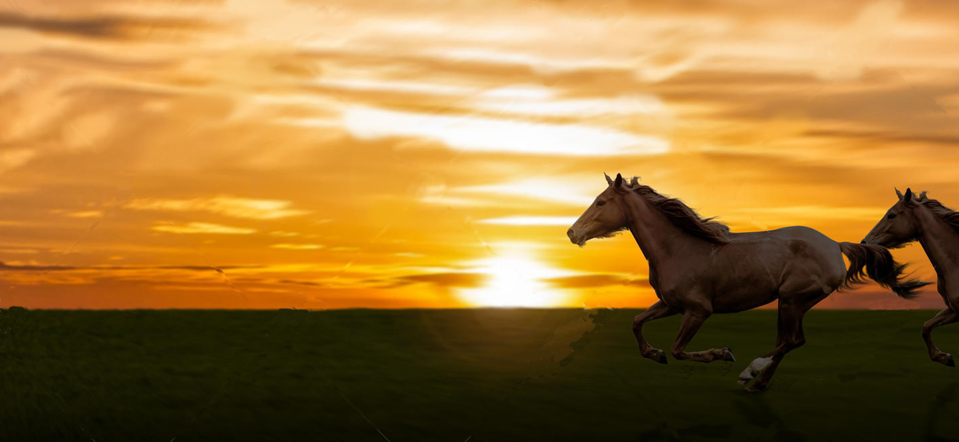 bg-sunset-horses